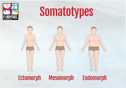 FoodyFree_Somatotypes